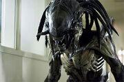 Pred-alien