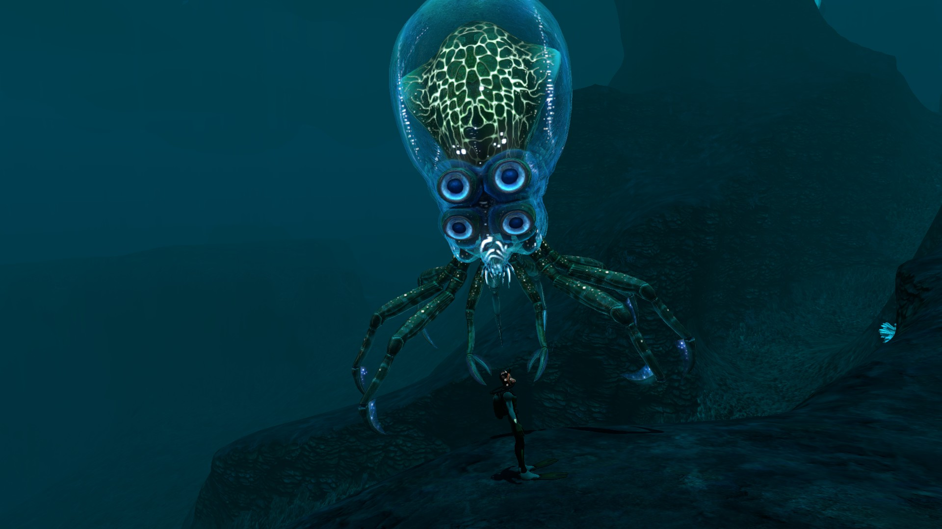how to kill a crabsquid