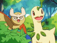 Noctowl and Bayleef