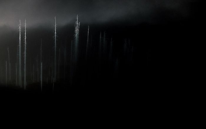 Trees-in-the-darkness-artistic-hd-wallpaper-1920x1200-4345