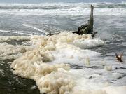 Rabid Sea Otter Foam