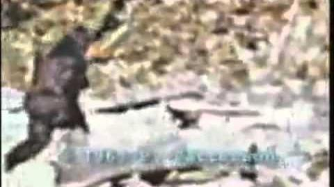 Ape-man caught on tape (Patterson footage stabilized)
