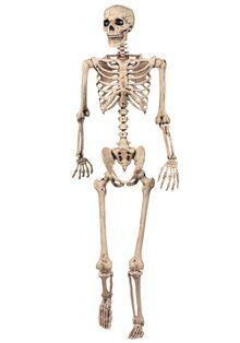 Skeleton-03