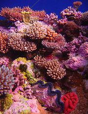220px-Coral Garden