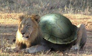 Lion Turtle by Atakino Zane.png