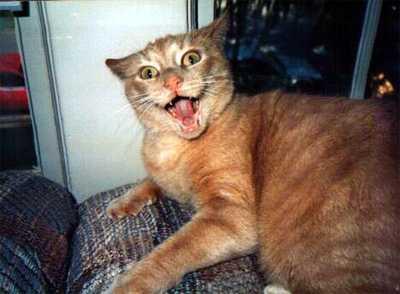 File:Crazy cat.jpg