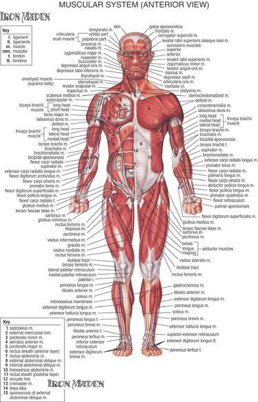 Human Diagram