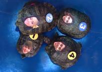 TurtleRace