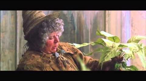 Mandrakes in Herbology
