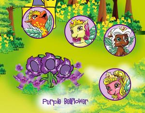 Purple Bellflower 1