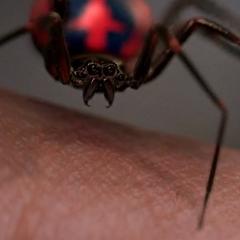 Модифицированный паук