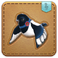FFXIV Doman Magpie Minion Patch