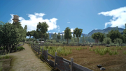 Saxham Outpost overgrown fields from FFXV