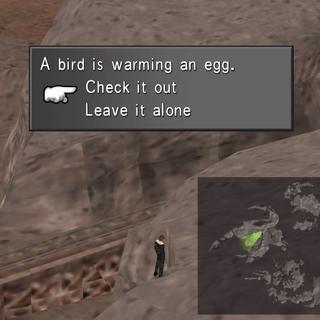 Bird warming its eggs location.