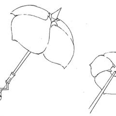 Herba's parasol