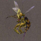 Hornet-ffx-enemy
