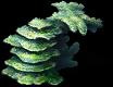 Coral-ffv-ios