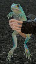 Радужная лягушка ФФ15
