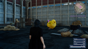 Yjhimei stuck under a chocobo in FFXV