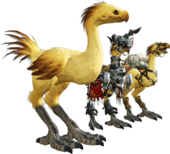 ARR Chocobos