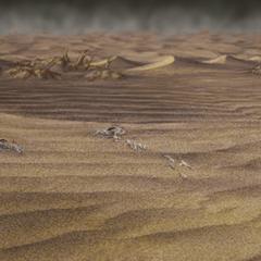 Ruined desert.