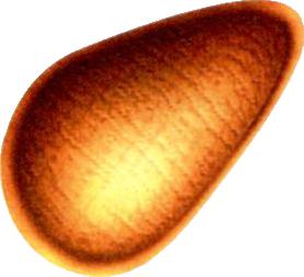 File:Pram Nut.png