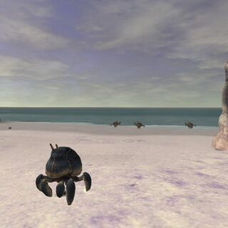 A crab in <a href=