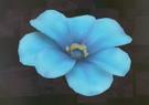 LRFFXIII Blue Flower