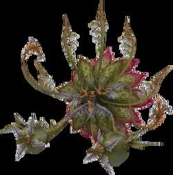 Rafflesia-ffxii
