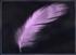 Lavender-Chocobo-FFXV