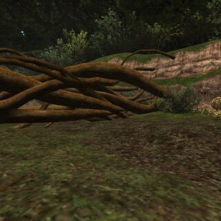 Knotted Roots in Ceizak Battlegrounds.