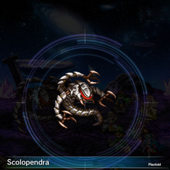 Scolopendra (1).