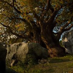 Tenebraen oak.