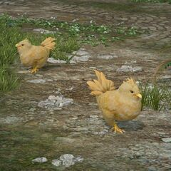 Цыплята на станции.
