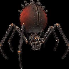 Widow spider.