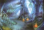 Forêt de Gapra