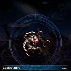 Scolopendra (3).
