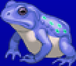 TAY PSP Frog Portrait 3