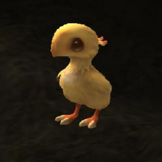 Chocobo chick.