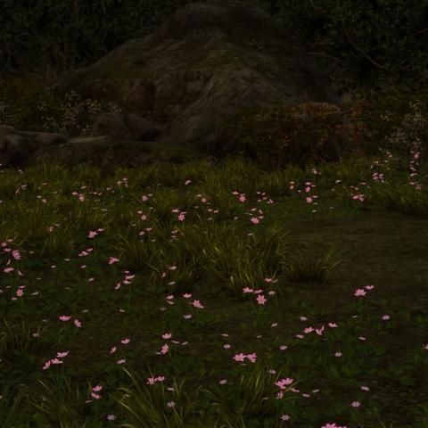 Pink volcanic flowers.