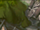 Final Fantasy IX/TH/Part 5