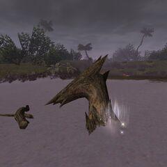 Ergon Locus<br />Dragon Driftwood<br />(E-11)