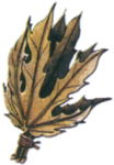 Herb FF1