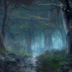 Misty forest.