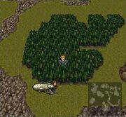FFVIDinodforest