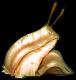 Slug-ffv-ios