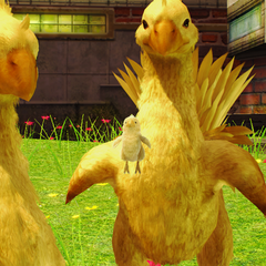 Chocobos in Nautilus.