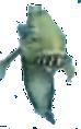 KillerFishDS.png