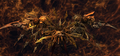 The-Undying-FFXII-TZA.png