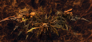 The-Undying-FFXII-TZA